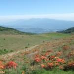 レンゲツツジ 車山 霧ヶ峰